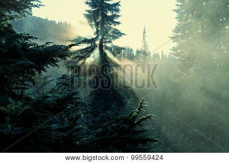 Sunbeams in morning summer forest