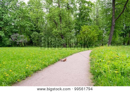 Landscape with road and squirrel
