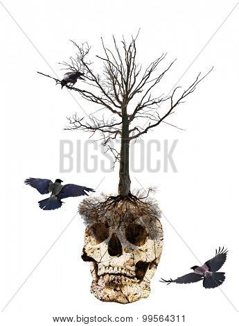 crows near skull and tree isolated on white background