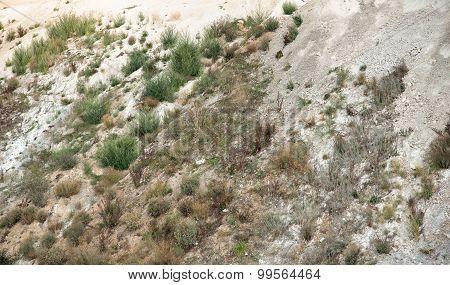 Overgrown Hillslope