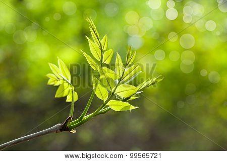 New Tree Twig