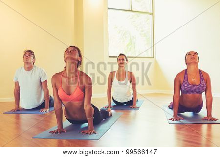 Group of People Relaxing and Doing Yoga. Practicing Cobra Pose. Wellness and Healthy Lifestyle.