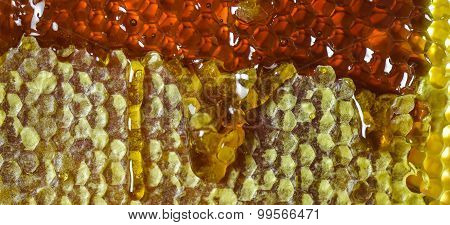 Honey Oozing From Sticky Honeycomb.