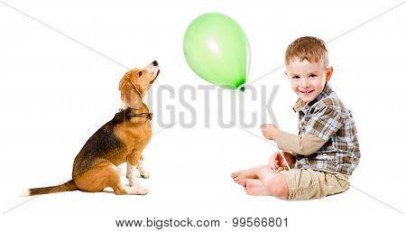 Boy and beagle dog playing balloon