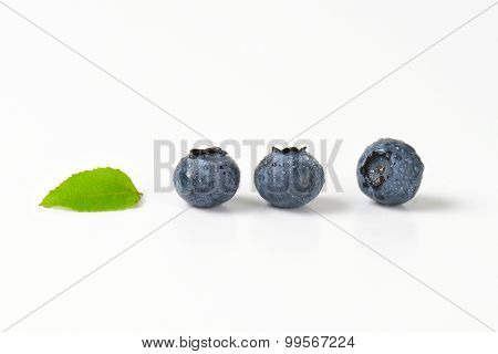 three dewy blueberries with green leaf