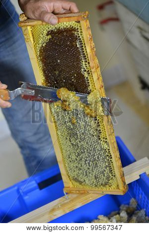 Female Beekeeper In Workshop Scraping Honeycomb Frame.