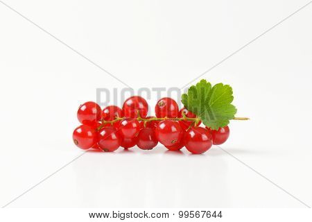 closeup of fresh red currant with leaves