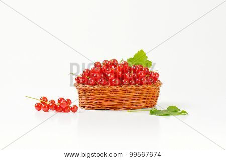 side view of straw basket with freshly picked red currant