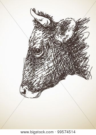 Sketch of cow head, Isolated Vector Illustration, Hand drawn