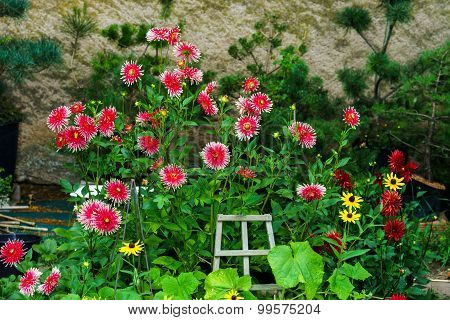 Beautiful Natural Flowers In Private Garden