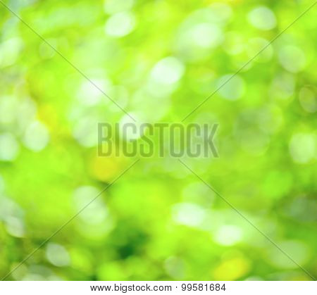 Abstract defocused blur green spring background