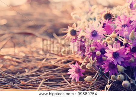 Beautiful wild flowers on straw  with sunlight