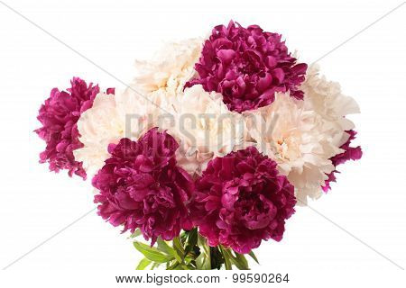 White And Purple Peonies