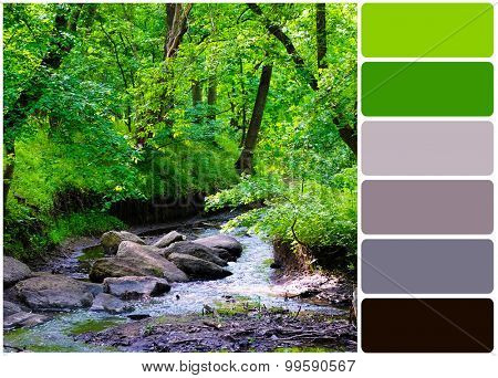 River over forest grove and palette of colors