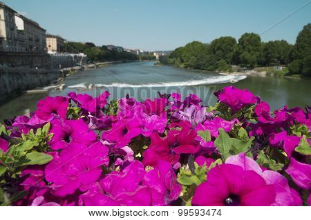 Beautiful flowers on the bridge over Po river in Turin