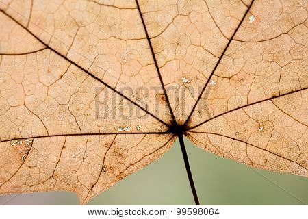 Natural Leaf Texture For Pattern