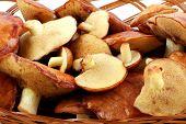 image of shroom  - Beautiful Mushrooms on white background - JPG