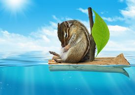 stock photo of chipmunks  - Funny animal chipmunk floating at sea voyage concept - JPG