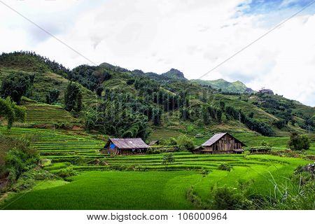 Rice Fields I green  Sapa Village, Vietnam.