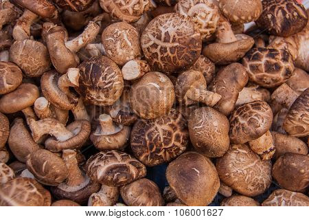 Raw Shiitake Mushrooms Food Background.