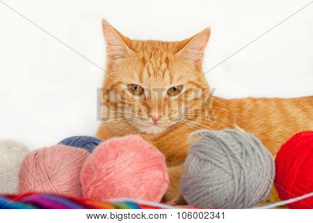 Cat with colorful yarn balls