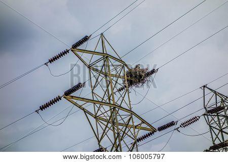 Osprey Nest On Power Lines