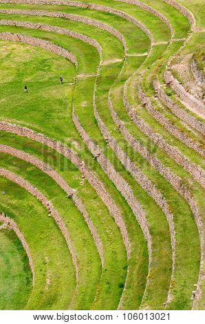 Peru, Inca Terraces Of Moray