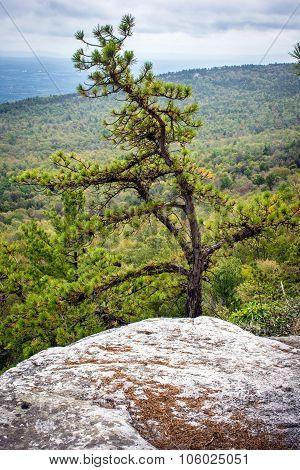 Pine Tree On Ridge