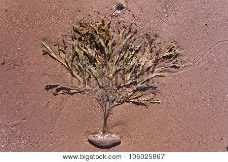seaweed tree; Prince Edward Island