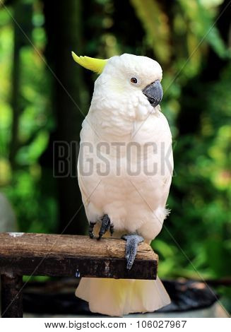 White Parrot Sitting On Wood