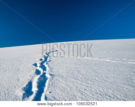 Tracks in Snow Covered Field