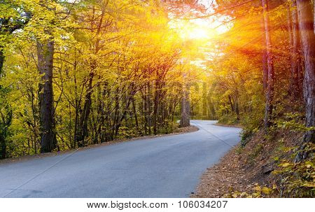 Asphalt road in autumn forest