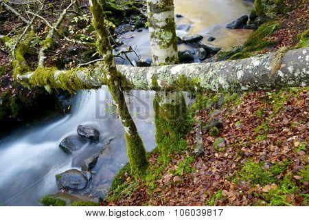 silky stream in a forest. Valley of Aspe, Pyrenees, France