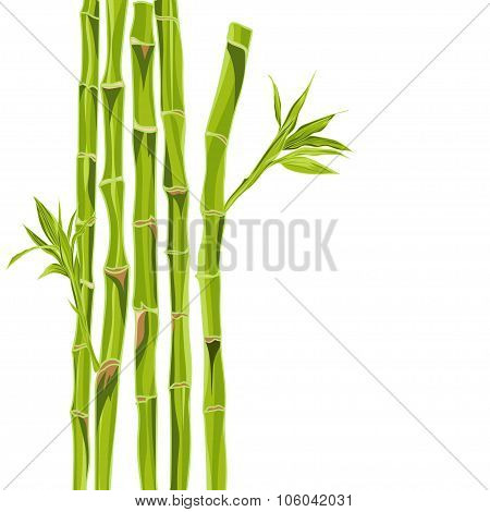 Hand-drawn green bamboo bacground with space for text