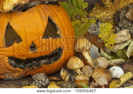 End of Halloween, moldy pumpkin. Remembering Halloween. Head carved from a pumpkin on Halloween.