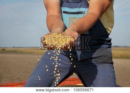 Farmer Hold Soy Bean Crop