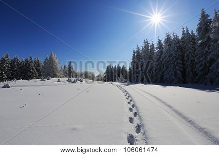 Winter sunny landscape and footprints in the snow, Sumava, Czech republic