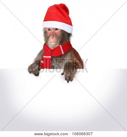Funny monkey Santa Claus holding blank Christmas banner