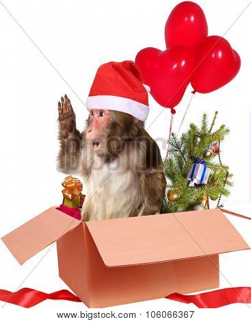 christmas monkey Santa Claus  in a cardboard box with gifts