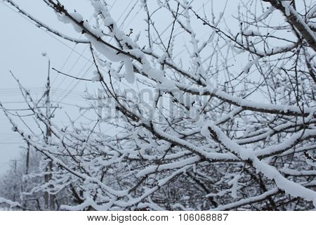 The_Branches_In_The_Snow