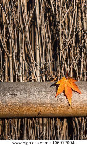 Autumn Leaf Over Wooden Background