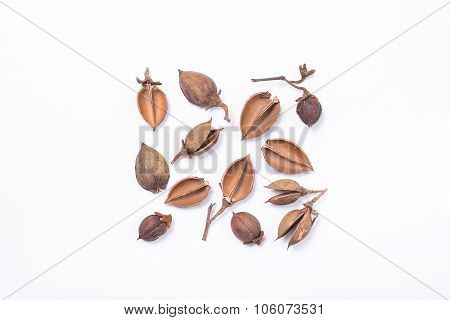 Tree Seed Pods Arranged In Square Pattern