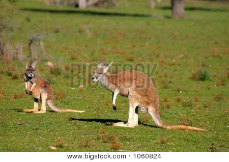 Australien 234