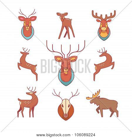 Deers, moose, antlers and horns, stuffed deer head