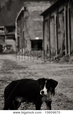 tortured dog