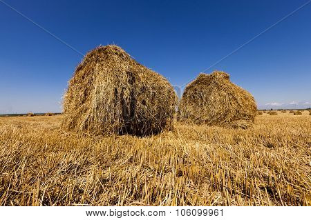 agricultural field . cereals