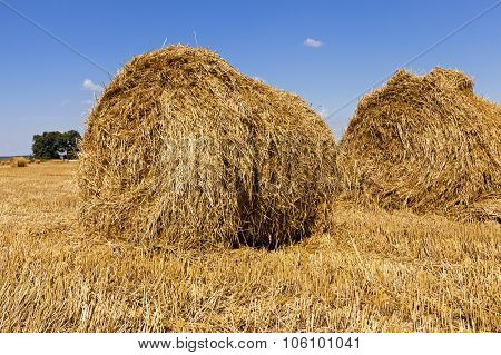 haystacks straw  in  field