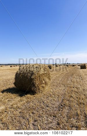 haystacks straw . cereal