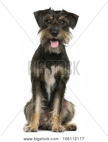 Crossbreed dog sitting in front of white background