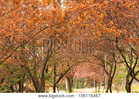 Blooming Trees In The Park